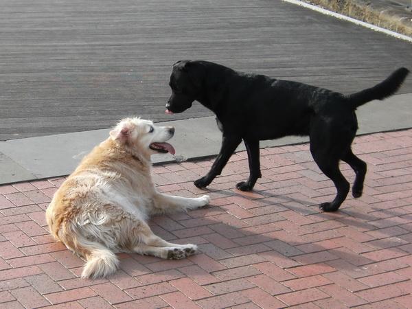 George hat eine Freundin gefunden