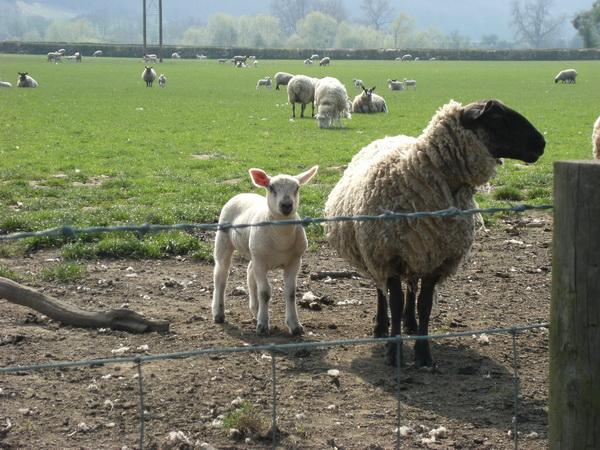 ... und Schafe (und jedes sieht anders aus!)