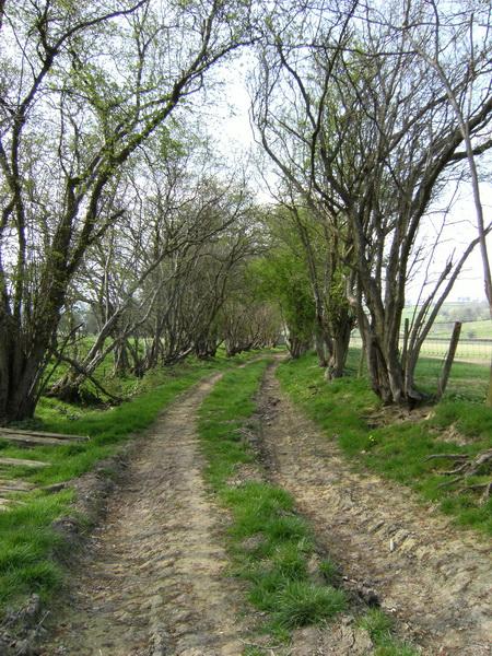 Wye-Valley-Walk