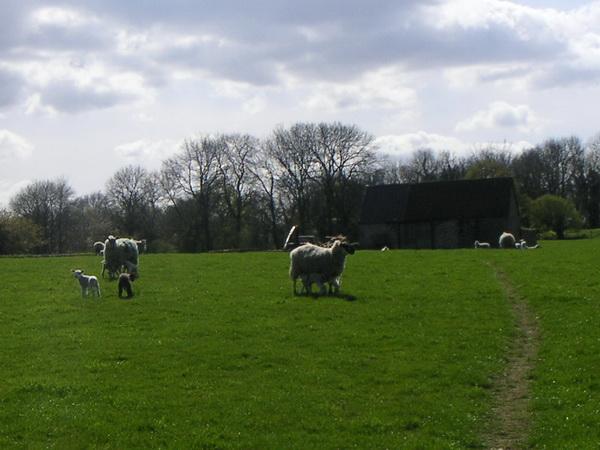 Public Footpath über die Schafsweide
