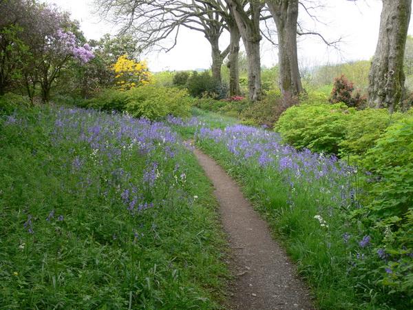 Der Bluebell Walk
