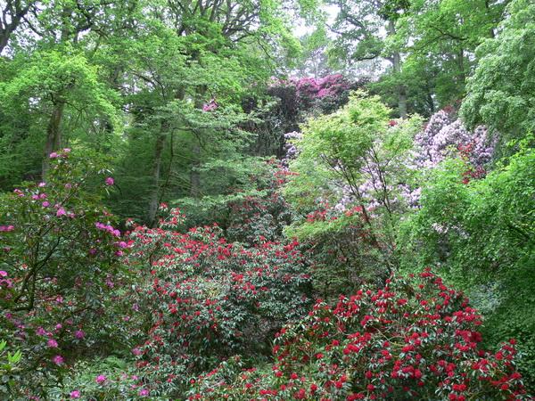 Im Waldgarten
