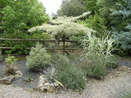 Ein Garten(t)raum in Grau