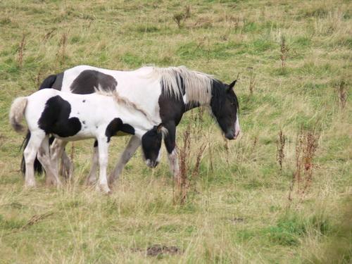 Eine Weide voller Pferde am Wegesrand