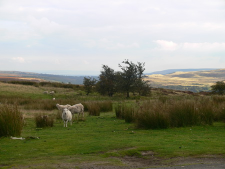 Rate mal: natürlich haben wir auch Schafe gesehen!