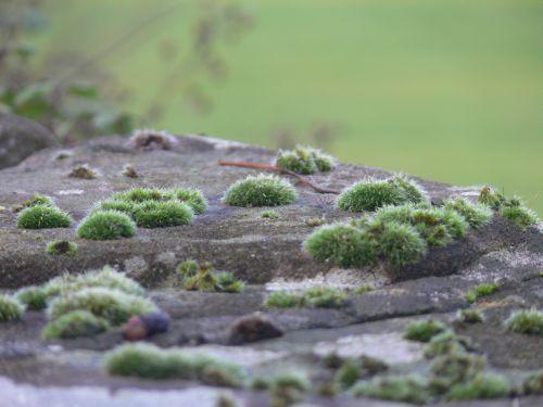 """""""Grüne Hügel in Wales"""""""