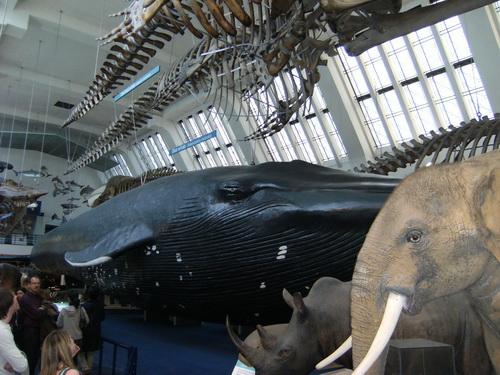 Die Säugetier-Halle