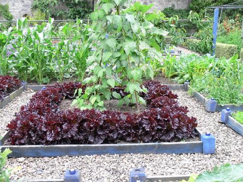 Salat und Bohnen