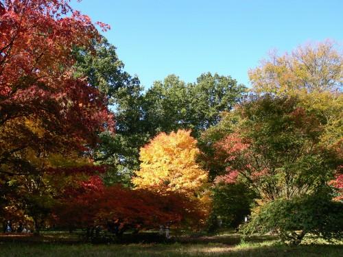 Kein Baum hat die gleiche Färbung wie sein Nachbar