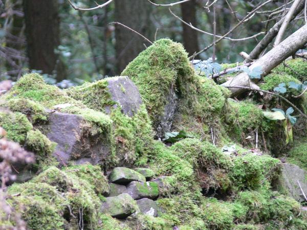 Bemooste Mauer im Wald