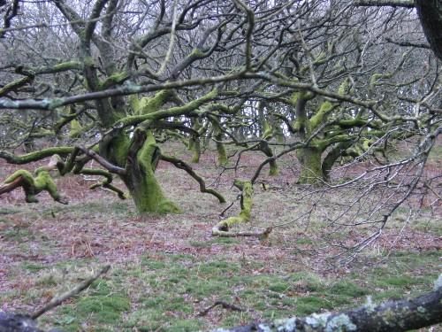Im Eichenwald