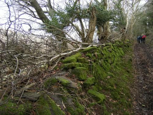Ein Hohlweg führt uns von Forest Coalpit weg