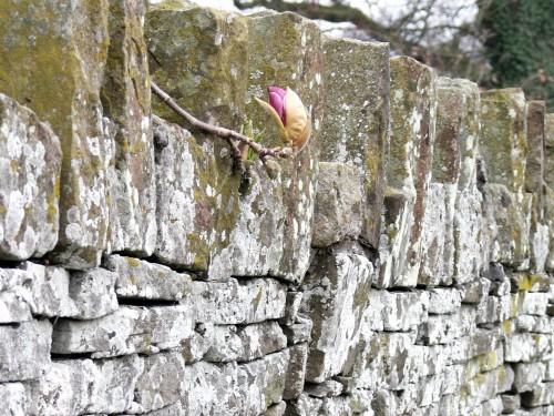 Ein Blick über die Mauer