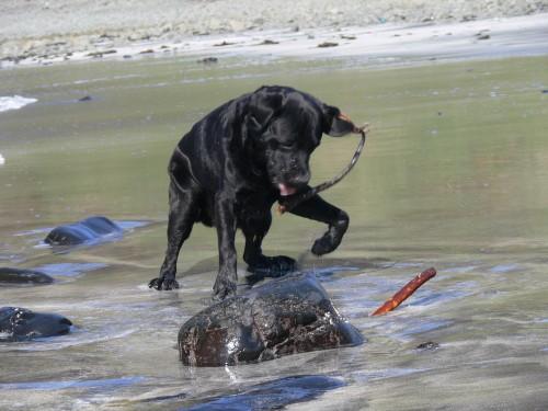 Er liebt das Meer