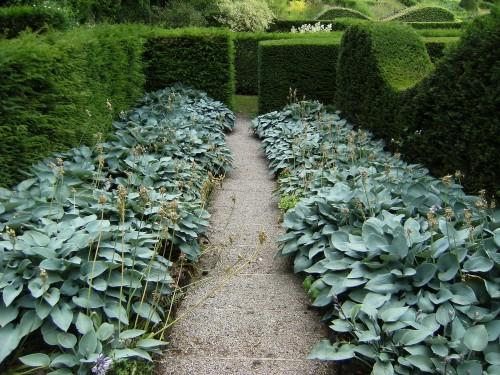 Bergenien-Garten