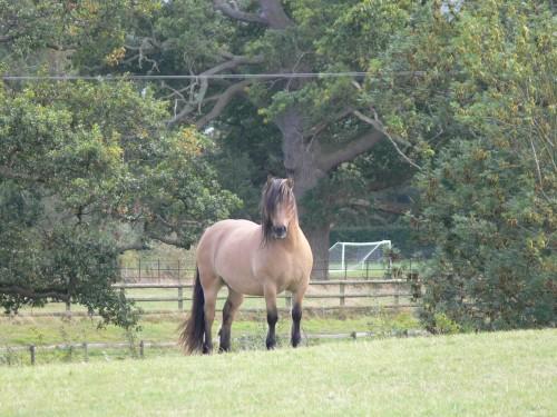 Pferd bei Bollitree Castle
