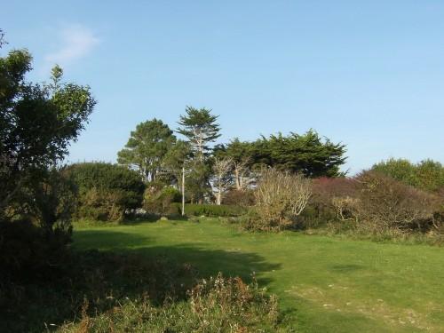 Zedern und Pinien im Garten: ziemlich posh!