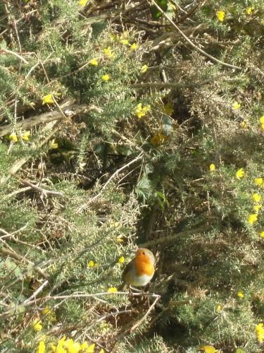 Ein Robin beäugt mich neugierig